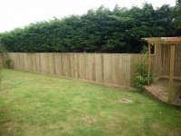 Feather edge fencing in Pembroke Dock (Pergola made by other)