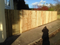 Feather Edge Fence and gate in Pentlepoir