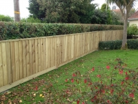 Feather edge fence in Lydstep (dog proofing the garden)